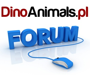 Forum DinoAnimals.pl